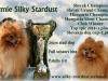 Malý špic oranžový - ARMIE Silky Stardust 2097923582