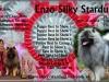 Vlčí špic vlkosivý - Enzo Silky Stardust 705363363