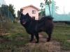 Veľký špic čierny - FINLAY Dubský dvůr 1718831060